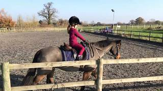 Mini D demo-ing the YELLOW Christmas Stocking test! (c) Demi Dressage 2018