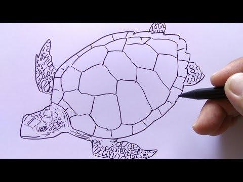 12+ Gambar kolase hewan kura kura dari biji bijian terbaru