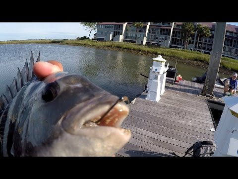 Hunting for the Fish with HUMAN TEETH Ft. FishCharleston (Folly Beach, SC)