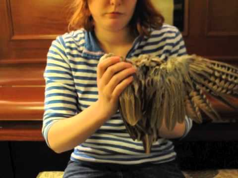 folding bird wings on posable art doll youtube