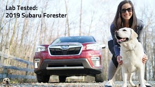 2019 Subaru Forester: Andie the Lab Review!