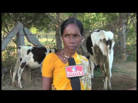 Paramparagat Krishi Vikas Yojana For Organic Farming | Dairy Farming  | Nela Talli | HMTV