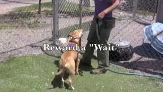 Brother Wolf - Jumpy Mouthy Dogs - Training Tips