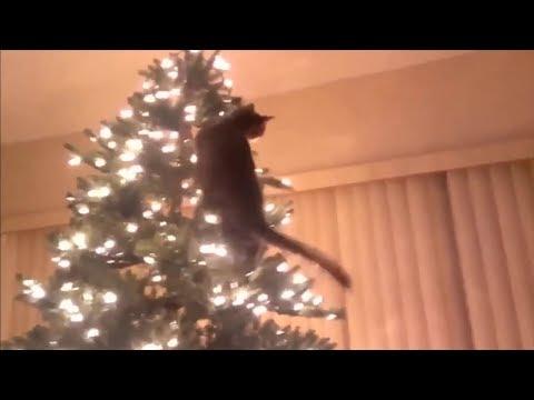 Cats vs Christmas trees amazing compilation