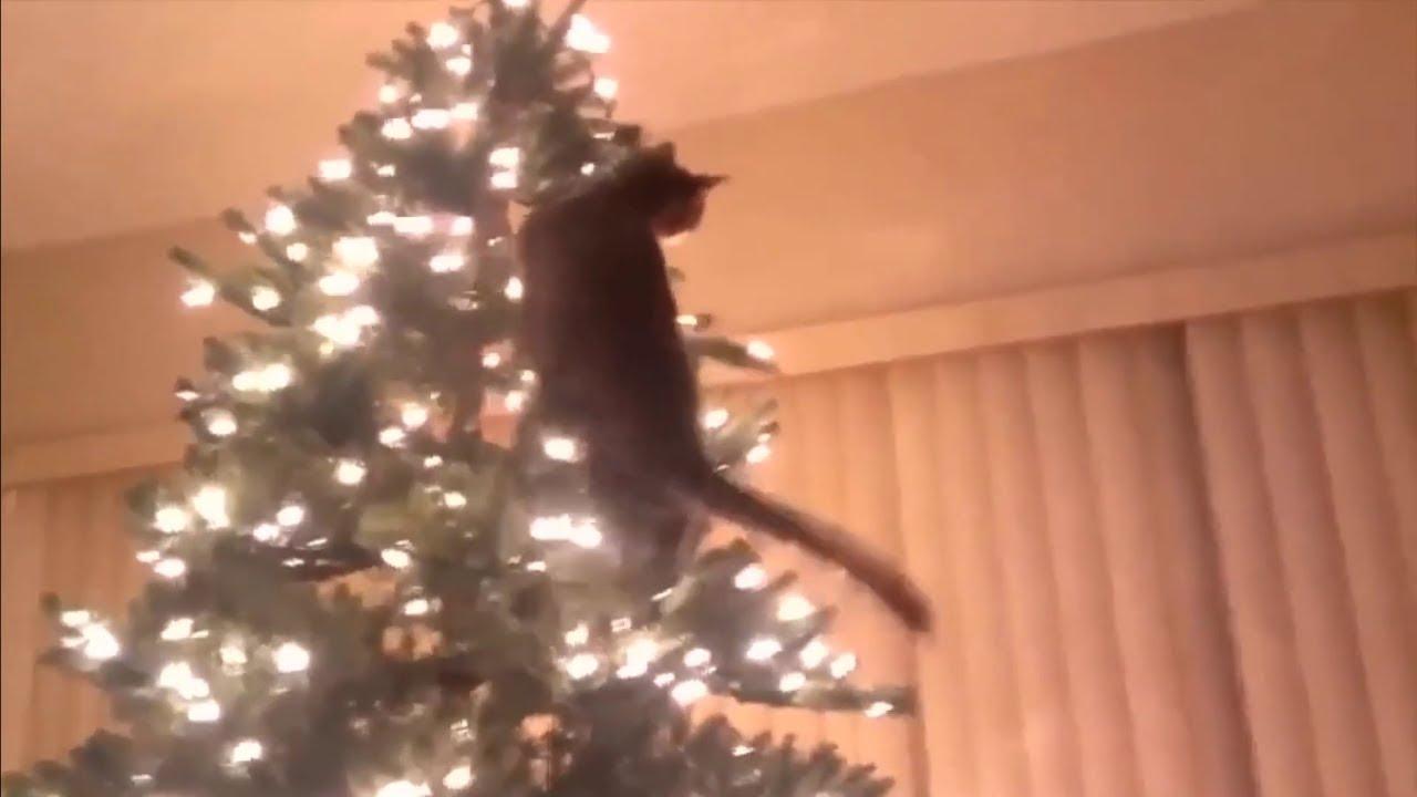 Cats Vs Christmas Trees.Cats Vs Christmas Trees Amazing Compilation