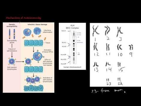 86P Mechanisms of Autoimmunity