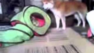 子猫と犬の格闘シーンです。大蛇ではありません。