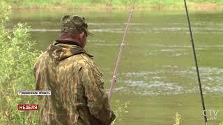 Тонны рыбы вылавливают рыбаки в гродненском регионе | Строители ГЭС не предусмотрели отвод для рыбы