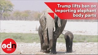 2017-11-17-08-41.Trump-lifts-ban-on-importing-elephant-body-parts