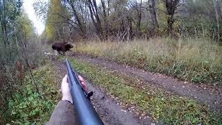 Охота на лося в Октябре