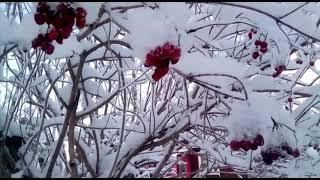 Зимняя сказка/ Московская область в снегу/ Наслаждаемся красотой природы/ Последний выходной января/