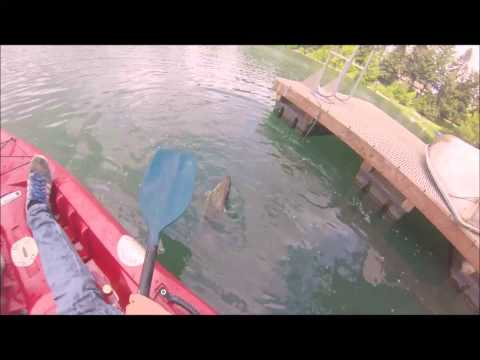Gopro fishing for largemouth bass on beds from kayak for Bed fishing for bass