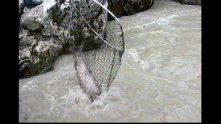 Dip Net Fishing for salmon in the Copper River, Alaska -- catching silvers and kings