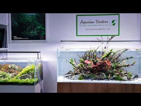 The Beautiful Aquascapes of Aquarium Gardens 2019