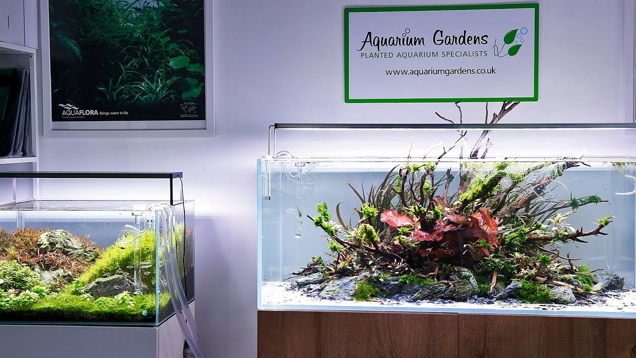 The Beautiful Aquascapes of Aquarium Gardens 2019 - YouTube