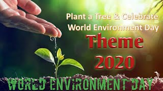 What is the theme of world environment day 2020?World environment day theme