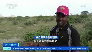 [天下财经]25年来最严重蝗灾威胁东非粮食安全  CCTV财经