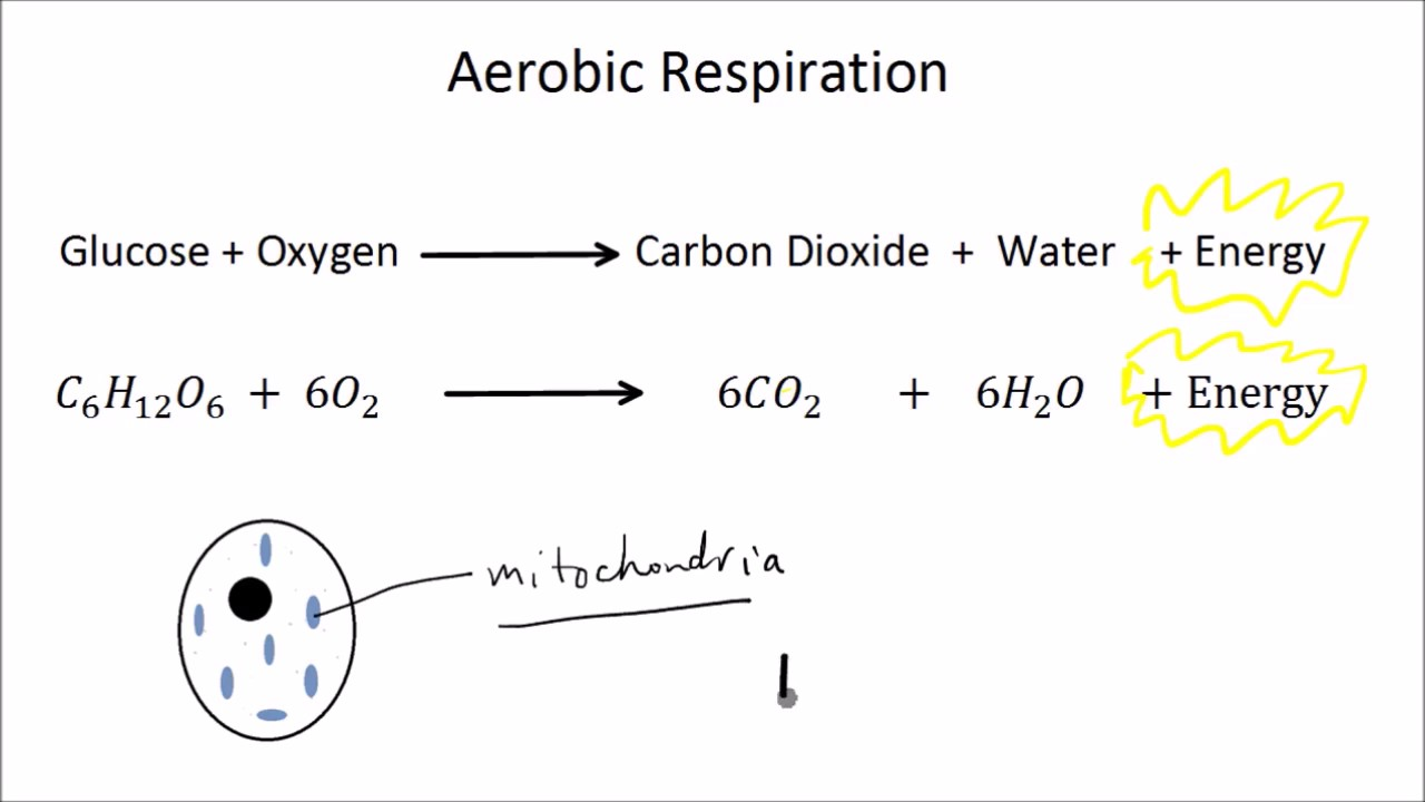 Aerobic and Anaerobic Respiration (Part 1 of 2) | GCSE ...