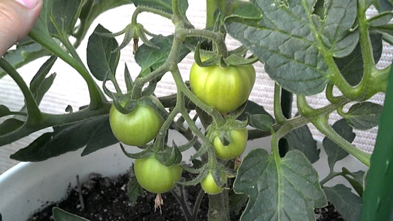 Kitchen Garden In Pots Balcony Container Vegetable Garden May 2012 Youtube