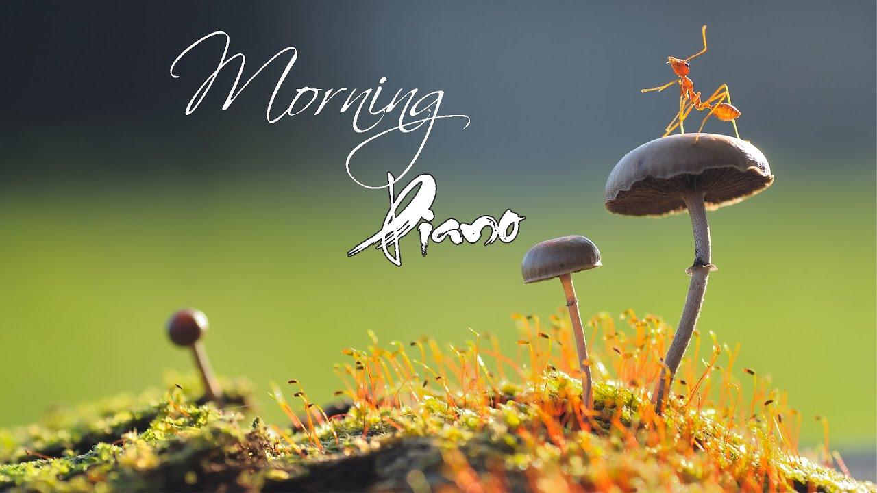 Morning Relaxing Music - Positive Piano Music With Birds Singing For Stress Relief and Studying