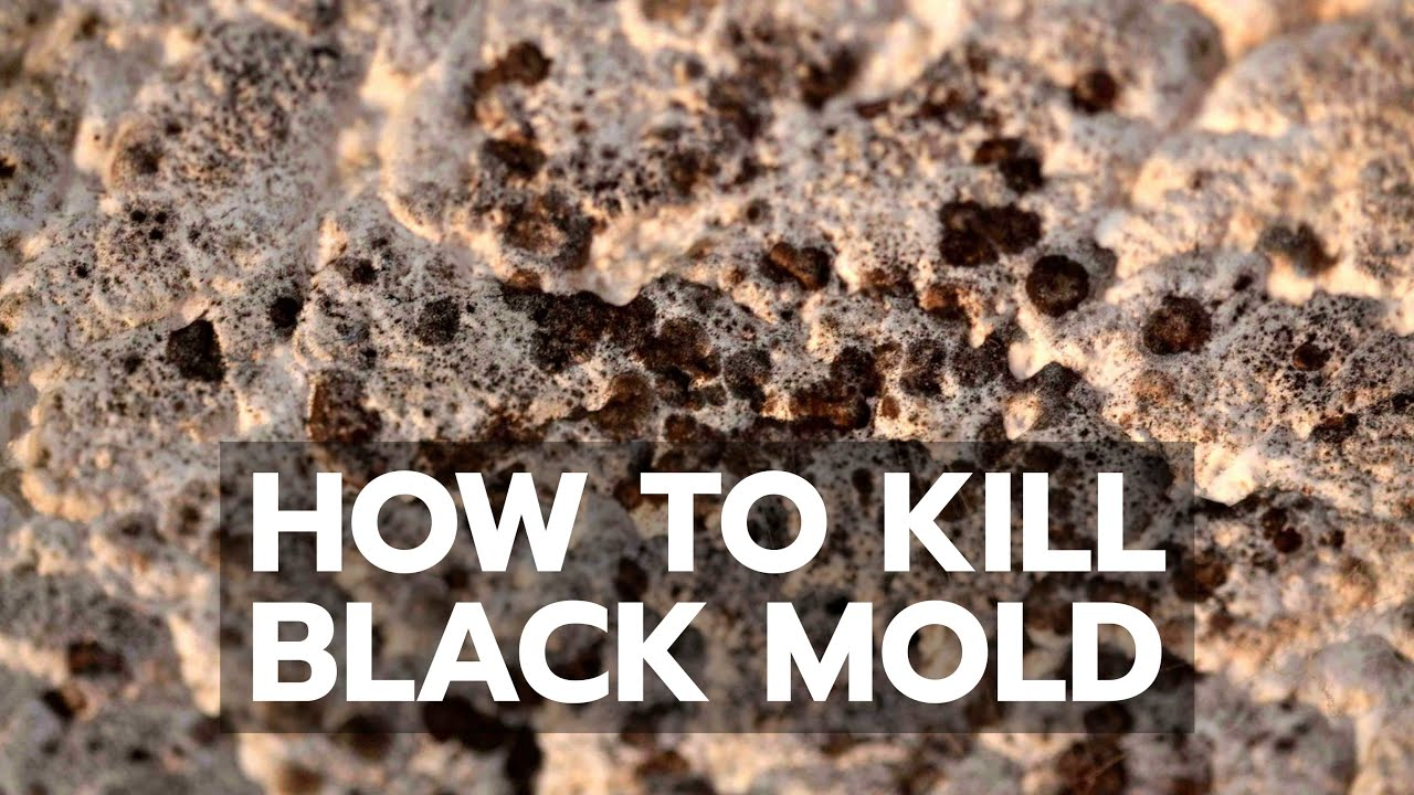 How to Kill Black Mold Safely & Forever - YouTube