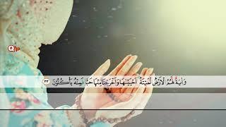 surah-yasin-beautiful-voice-woman-quran-recitation-by-holy-quran