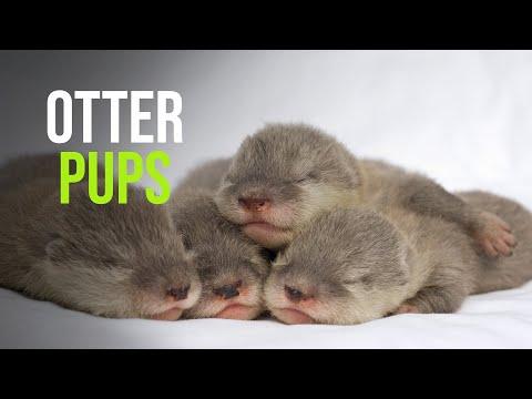 Baby Otters Sea World Orlando 2009
