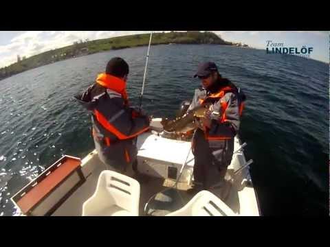 Torskfiske på Öresund
