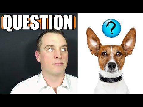 Dog Dad's Question For Viewers | Raw Feeding 101