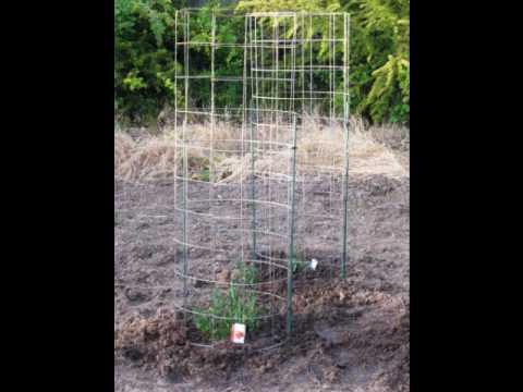 My Vegetable Garden - 2010