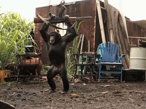 Ape With AK-47 - Youtube