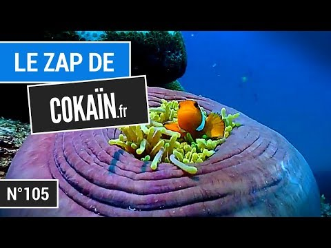 Le Zap de Cokaïn.fr n°105