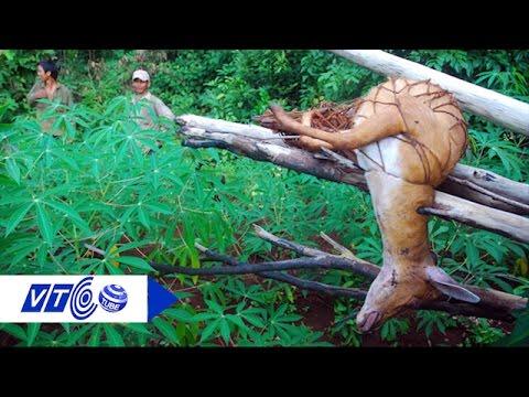 Ghê rợn trước bẫy săn bắt động vật hoang dã  | VTC