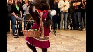 медведь видео / выступление животных / контактный зоопарк 8(965)380-13-11