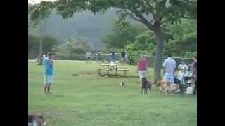ハワイのハワイカイ地区にあるドッグパーク.