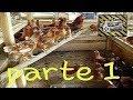 Como hacer gallineros con palets  parte 1  : )