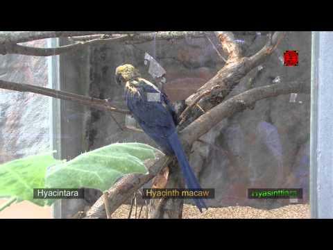 Helsinki Zoo (1) - Högholmens Djurgård - Korkeasaaren Eläintarha