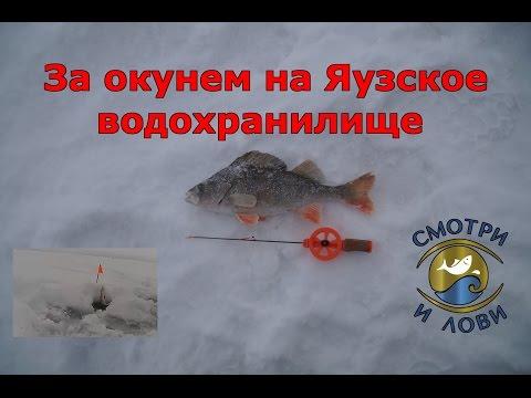 ловля окуня на рузском водохранилище