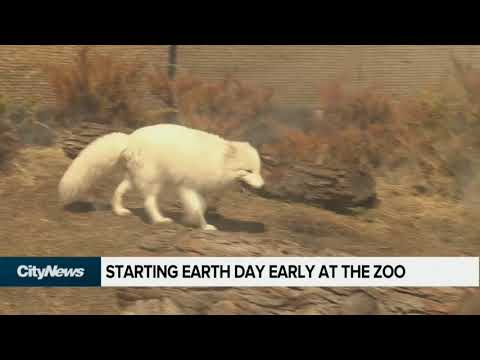 Starting Earth Day early at the zoo