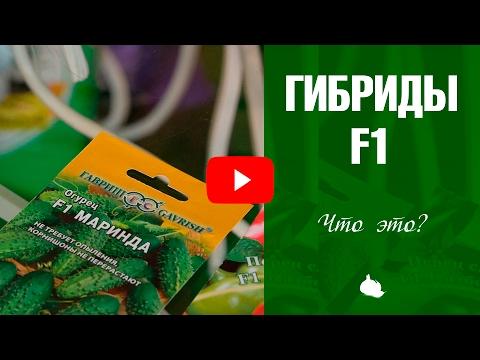 Семена F1 ➡ Что означает эта надпись на упаковке?