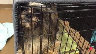 33 Shih Tzus Surrendered In Parma Heights