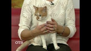 Знакомство с питомцами: кот Ластик ищет хозяев