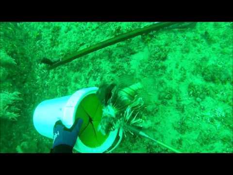 Lionfish Blast 2016
