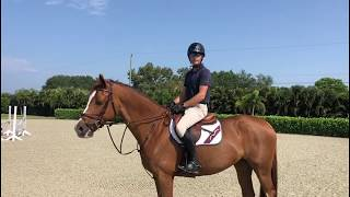 At Home with Glenbeigh Farm | Practicing for Competition | Show Jumping Training Tips