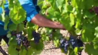 Esprit Lot - Rencontre avec les vignerons du Lot