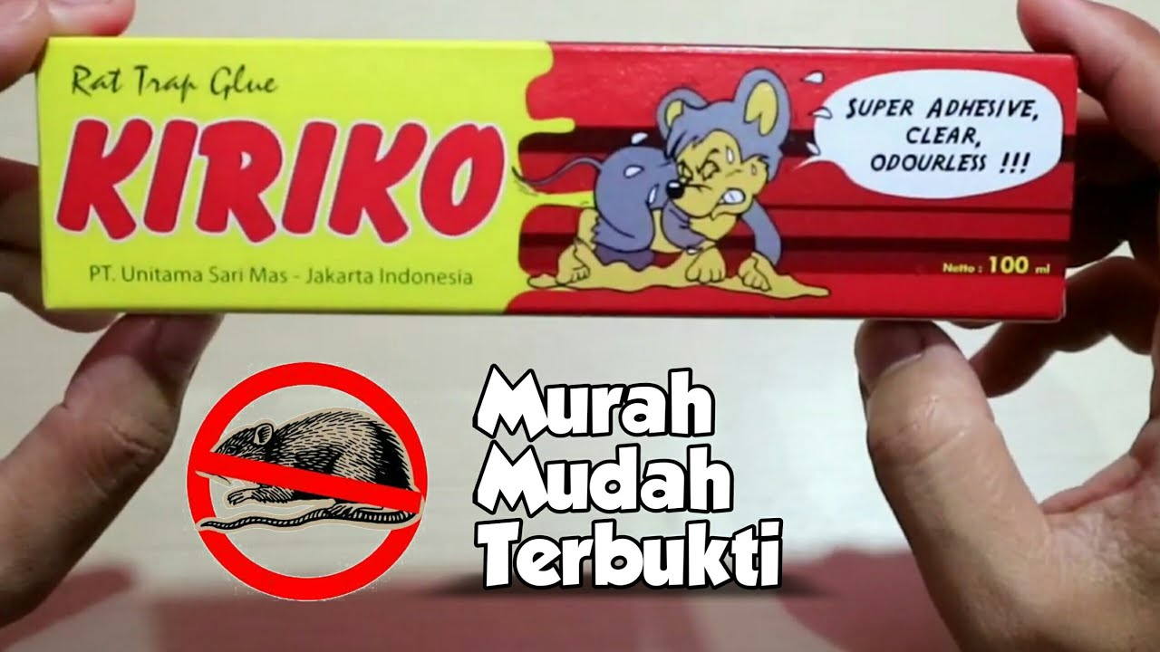 Jebakan Tikus Ampuh Ditoko Rumah Kantor Murah Tanpa Bau Tikus Trap Mice With Super Glue Youtube