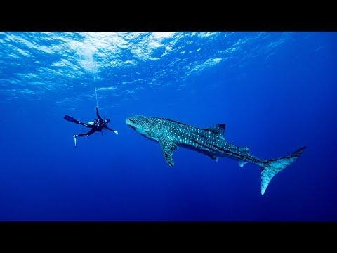 Palau to Philippines - An Underwater Adventure (4K)
