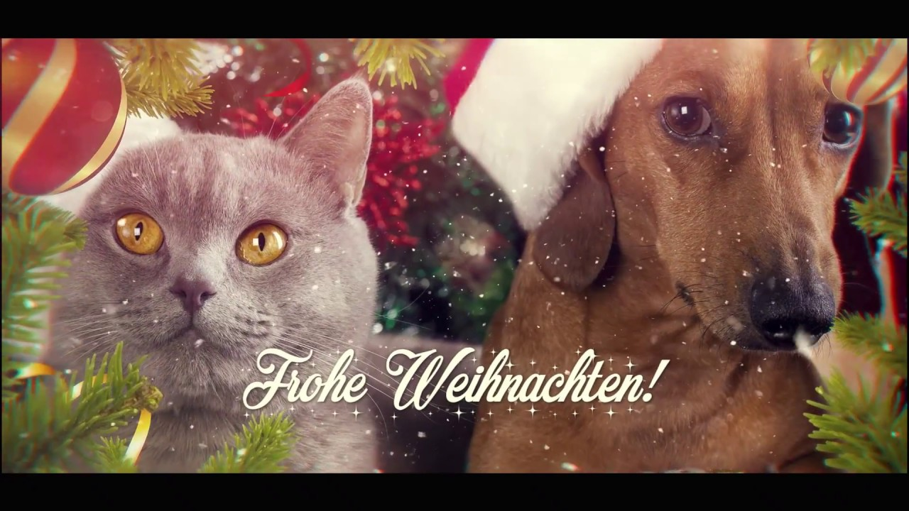 Christmas Songs By Dogs Cats We Wish You A Merry Christmas Silent Night Youtube