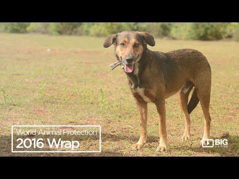 World Animal Protection : 2016 Wrap