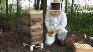 Warre Hive #1 Adding a Box